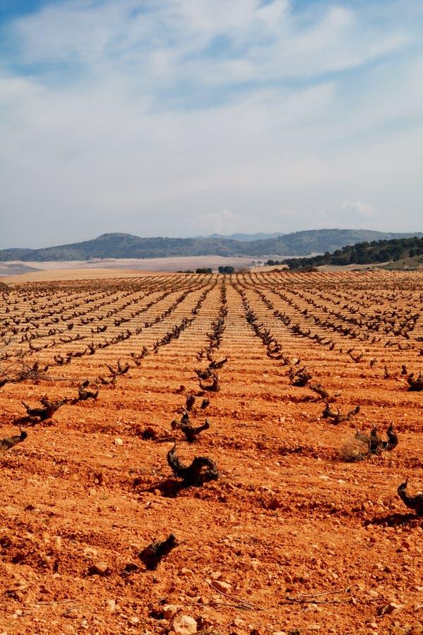 Spaanse wijngaard royalty-vrije stock afbeeldingen