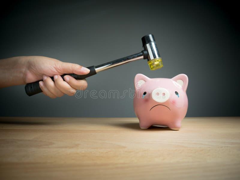 Spaarvarken, besparingen, investeringen, muntconcept royalty-vrije stock foto's