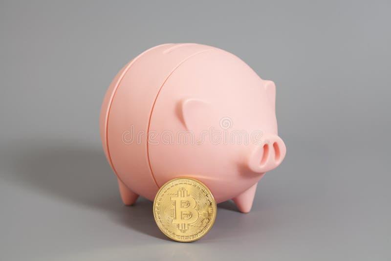 Spaarvarken met Één Gouden Bitcoin-muntstuk (nieuw virtueel geld)  royalty-vrije stock fotografie