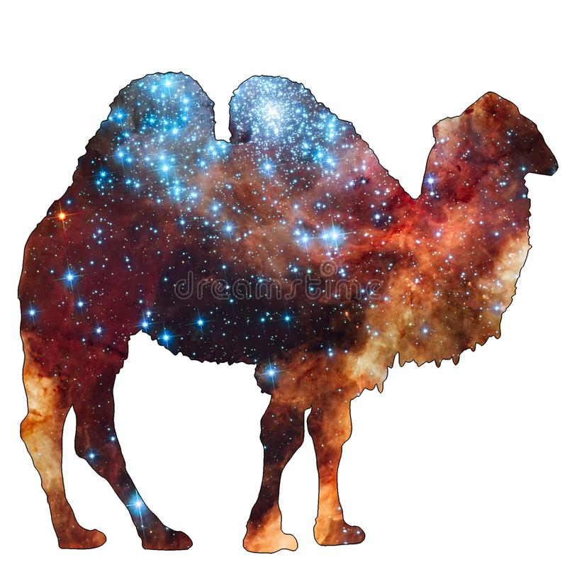 Space Animal Camel. Illustration of space animal Camel. Space animals are cute and mystical creatures who travel in the sky among the stars in everlasting royalty free illustration