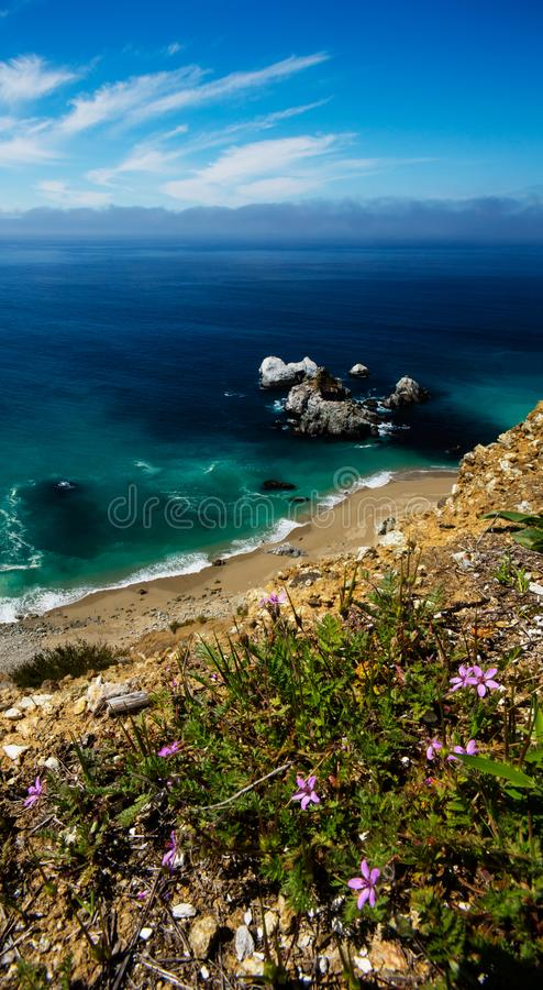 Macro flowers on a cliff over Pacific Ocean in Big Sur. This space no longer exists since 2016 when winter swells came through and with immense rain moved the royalty free stock photo