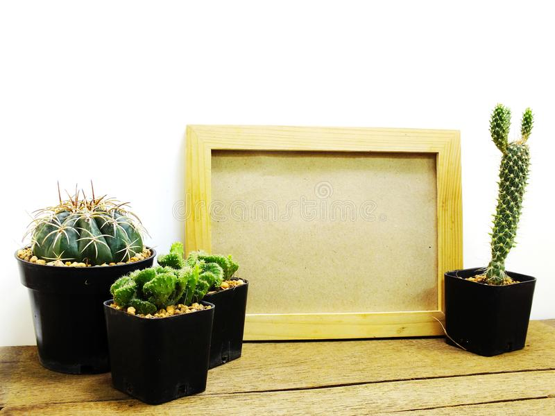 Space of photo frame background with cactus decorate royalty free stock photography