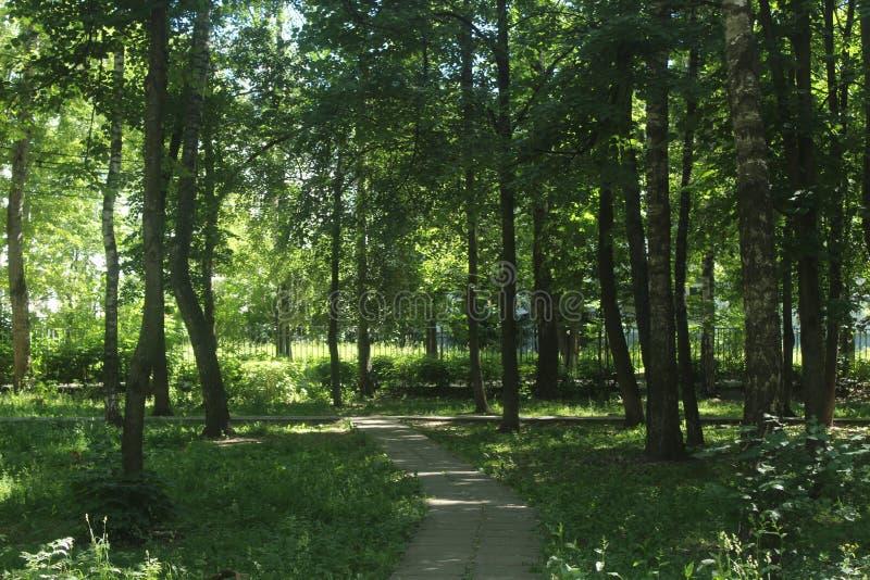 Spacer Korolev Liza Chajkina park zdjęcia royalty free