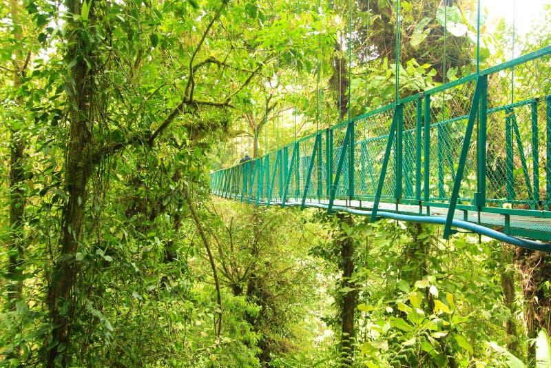 Spacer przez treetops fotografia royalty free