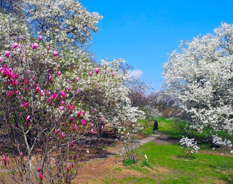 Spacer w kwitnącym ogródzie obraz royalty free