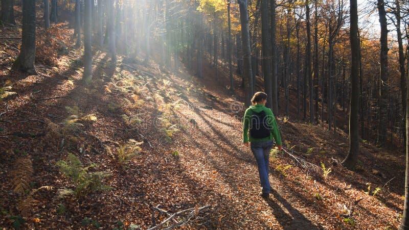 Spacer w lesie obrazy royalty free