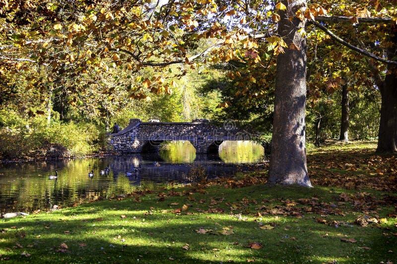 Spacer w parku zdjęcie royalty free