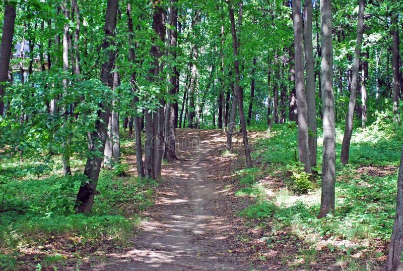 Spacer w parku wśród gęstych wysokich drzew, jasny letni dzień fotografia royalty free