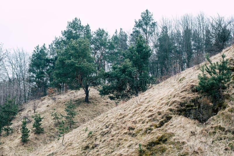 Spacer woko?o Po?udniowej pluskwy rzeki, Ukraina obrazy royalty free