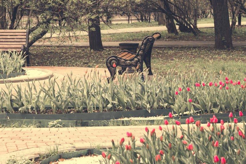 Spaceru kamienni wiatry w ogródzie; ławka, tulipany kwitnie - wizerunek fotografia royalty free