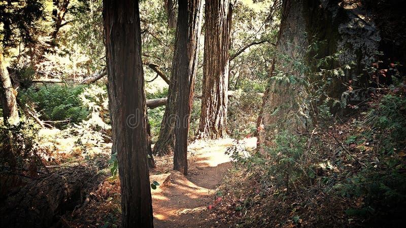 spacery lasu obrazy royalty free