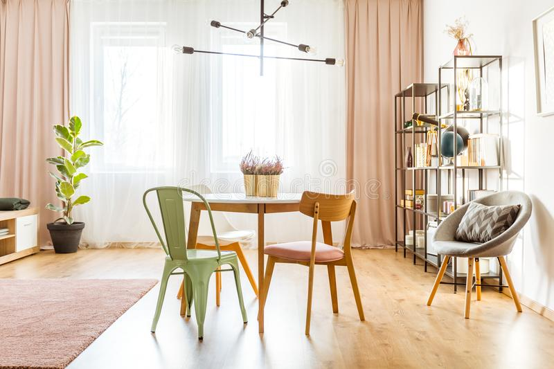Spacious living room with ficus. Mint chair at table with heathers in gold pots near grey armchair in spacious living room interior with ficus tree and pink stock photo