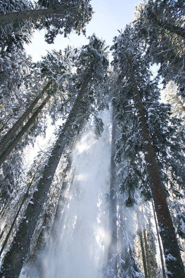 spadać śnieg fotografia royalty free
