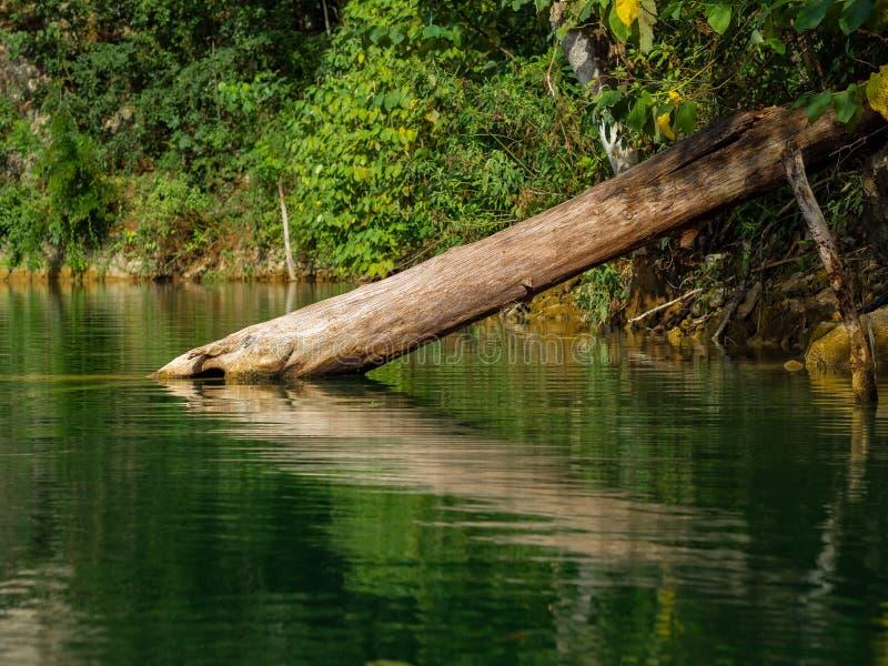 Spadać drzewna połówka zanurzał w jeziorze w dżungli obrazy stock