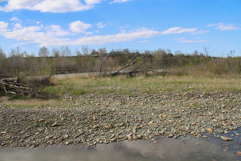 Spadać drzewny lying on the beach w banku jezioro z swój gałąź stronniczo zanurzał w wodzie zdjęcia stock