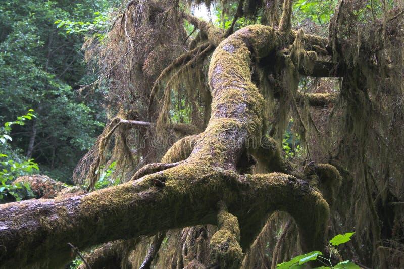 spadać drzewo obraz stock