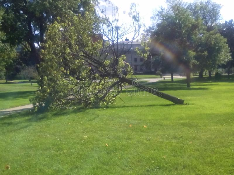 Spadać drzewo, biblioteka park; Kenosha, Wisconsin zdjęcie stock