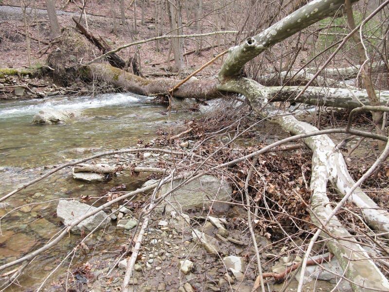 Spadać drzewo przy Owens zatoczką obrazy royalty free