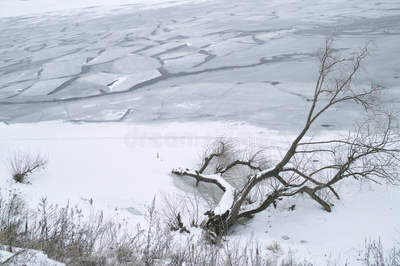 Spadać drzewo w zimie fotografia stock
