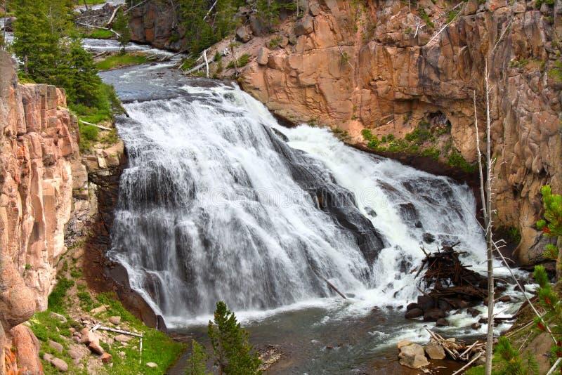 spadać gibon Yellowstone fotografia stock