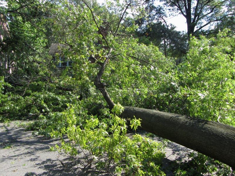 spadać huraganowy drzewo zdjęcia royalty free