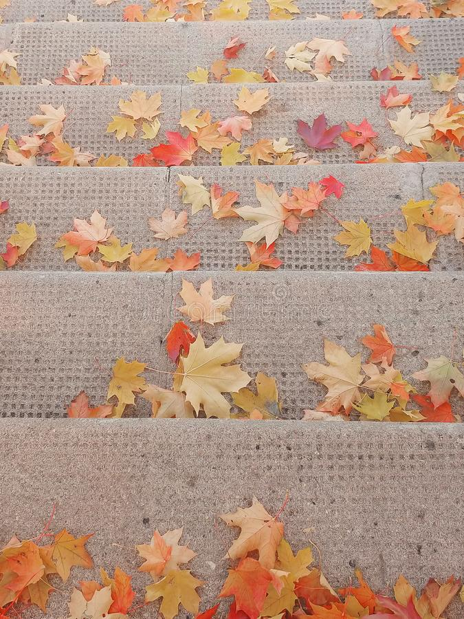 Spadać jaskrawa czerwień, żółci liście klonowi na schodkach fotografia royalty free