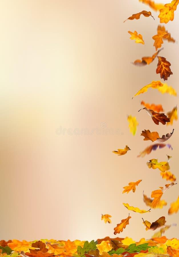 spadać jesień liść obraz royalty free