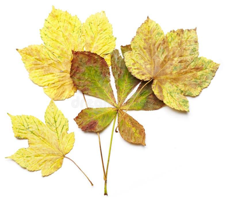 Download Spadać jesień liście zdjęcie stock. Obraz złożonej z greenbacks - 28970050
