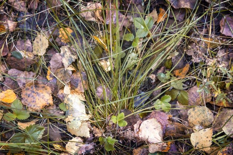 Spadać jesień liście drzewa wśród trawy obrazy royalty free