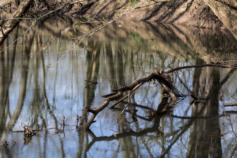 Spadać kończyna w wiosna strumieniu zdjęcia royalty free
