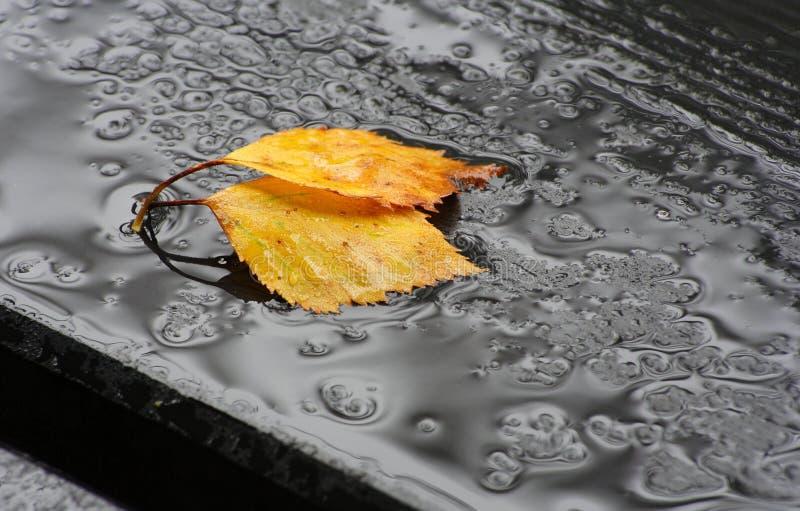 spadać liścia deszcz fotografia stock