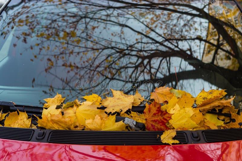 Spadać liście klon na samochodowym cowl zdjęcie royalty free