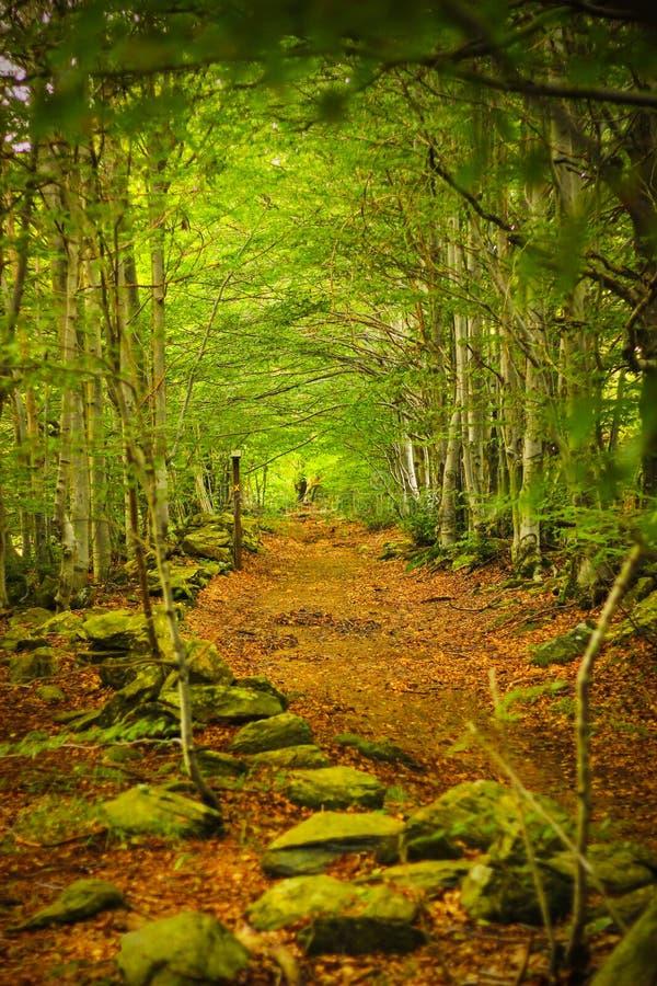 Spadać liście na ścieżce w lesie w Beigua obywatela Geo parku zdjęcia stock