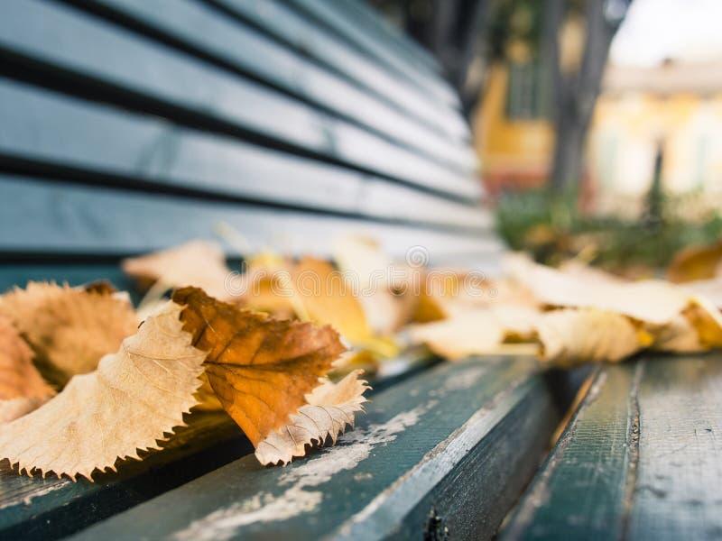 Spadać liście na drewnianej zielonej parkowej ławce zdjęcie royalty free