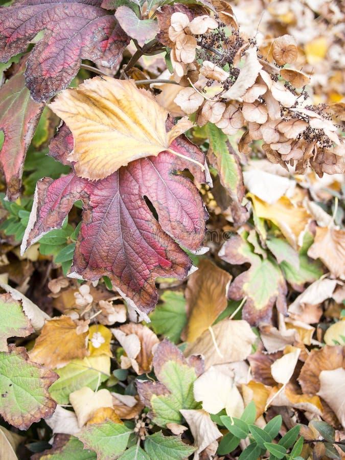 Spadać liście na drewnianej zielonej parkowej ławce fotografia royalty free