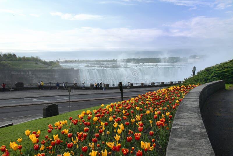 spadać Niagara tulipany zdjęcia royalty free