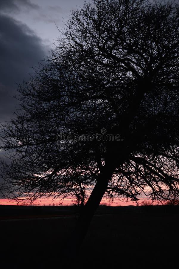 Spadać out stary drzewo ciężkim wiatrem w zmierzchu zdjęcia royalty free