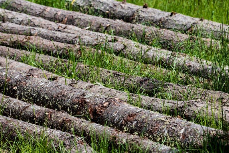 Spadać sosny kłaść z rzędu w trawie obraz royalty free