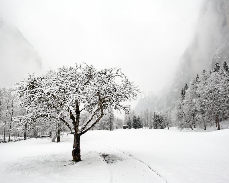 spadać truemmelbach zima obraz royalty free