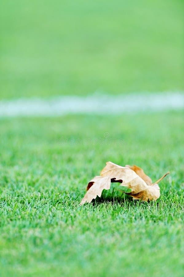 Download Spadać Urlop Na Boisko Do Piłki Nożnej Zdjęcie Stock - Obraz złożonej z naturalny, sztuka: 57658778