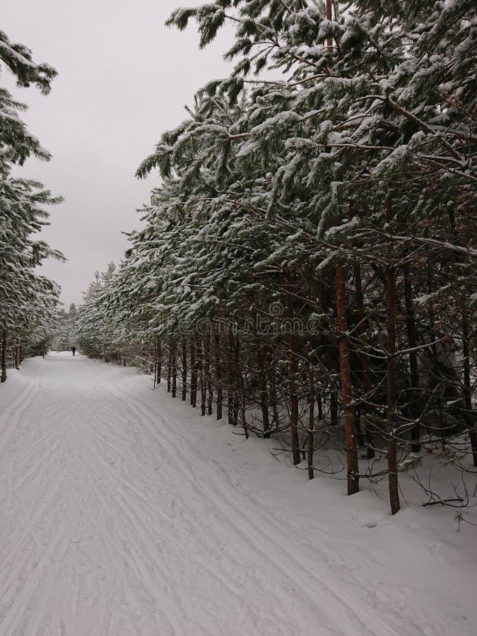 Spada śnieg od drzewa obraz royalty free
