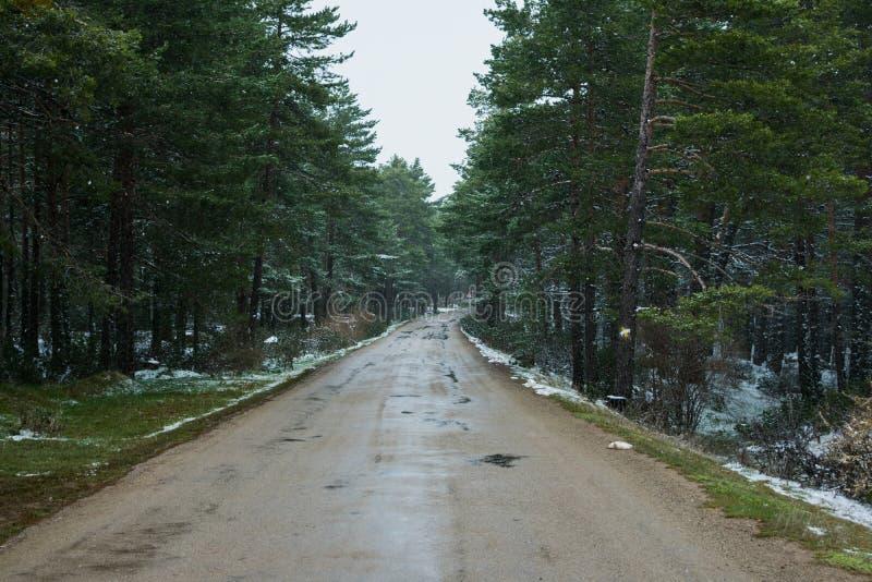 Spada śnieg w górach, droga w lesie zdjęcia stock