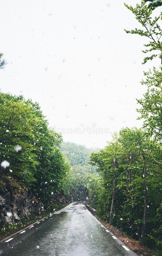 spada śnieg w górach, droga w lesie z śnieżnymi płatkami, zimy natura, wakacyjny weekend w naturze, zielenieje drzewa zdjęcie stock