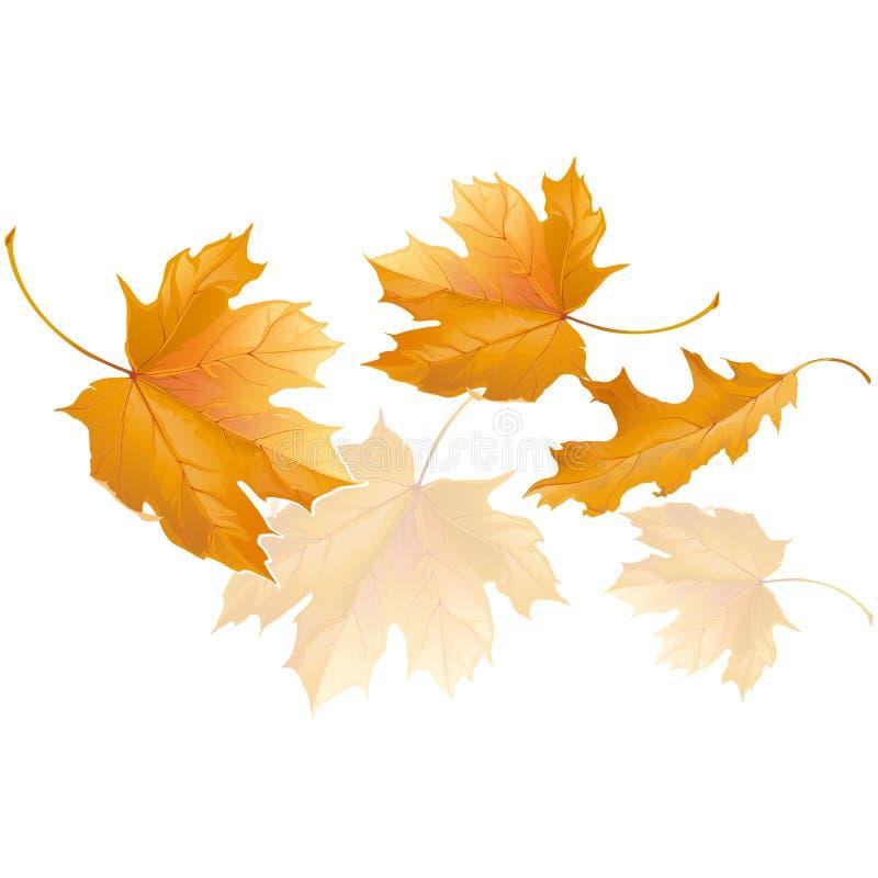 Spada żółci jesień liście klonowi latają w wiatrze ilustracja wektor