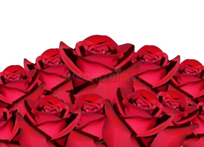 Spada czerwieni róża odizolowywająca na białym tle ilustracji