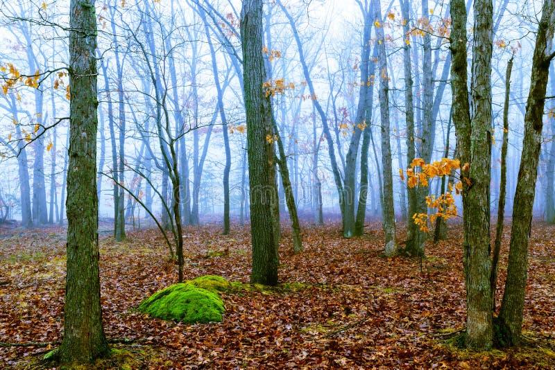 Spada dąb opuszcza na scenicznym jesień lasu ranku zdjęcie stock
