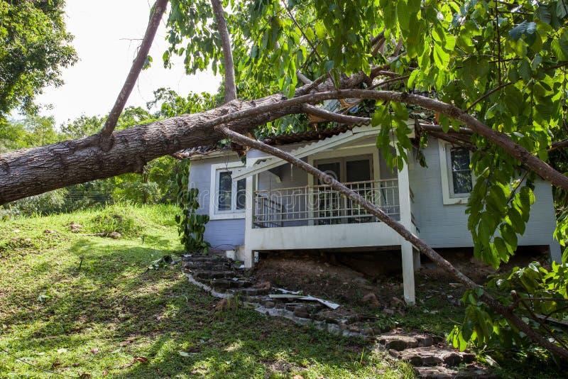 Spada drzewo po ciężkiej burzy na szkoda domu fotografia royalty free