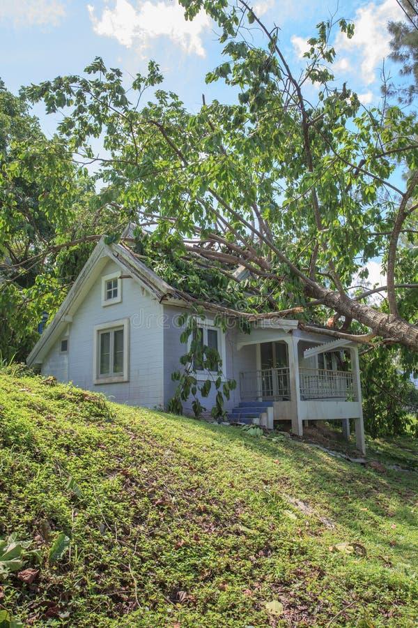 Spada drzewo po ciężkiej burzy na szkoda domu obrazy royalty free