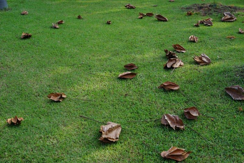 Spada liść na ziemi zdjęcie stock