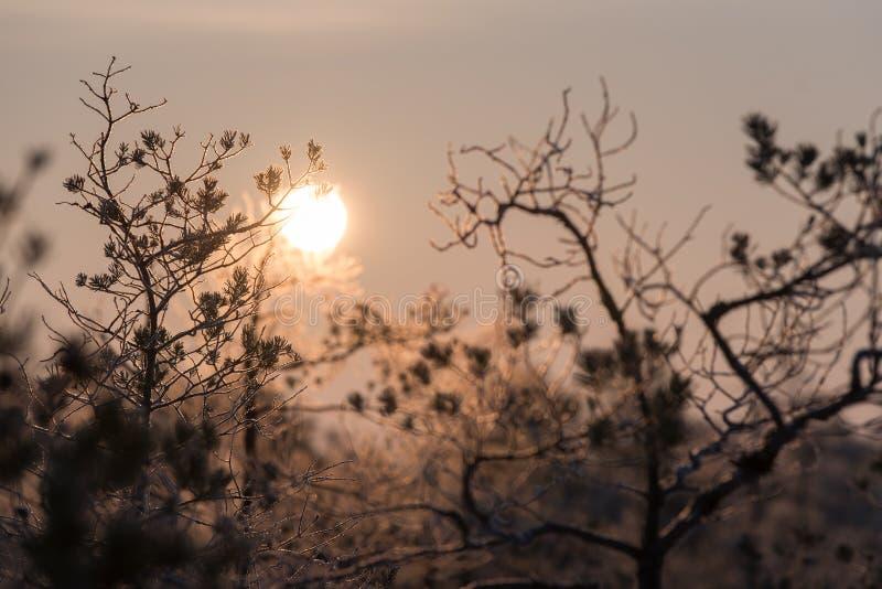 Spada liścia naturalny tło Piękny wschód słońca w zimie zdjęcia royalty free